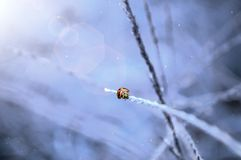 LadyBug το χειμώνα στοκ φωτογραφίες