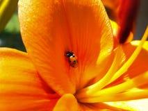 ladybug τυχερός Στοκ φωτογραφία με δικαίωμα ελεύθερης χρήσης