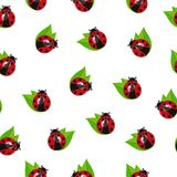 Ladybug вектора безшовный Стоковые Фото