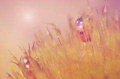 Ladybug в лесе мха Стоковые Фотографии RF