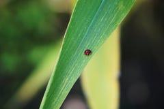 Ladybug в лист 5 стоковые фото