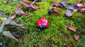 Ladybug в древесинах Стоковые Изображения RF