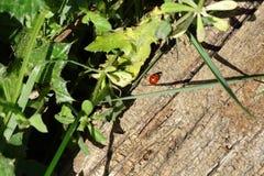 Ladybug в хоботе с заводами Стоковое фото RF