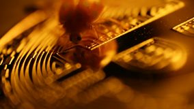 Ladybug жука на bitcoin монетки сток-видео
