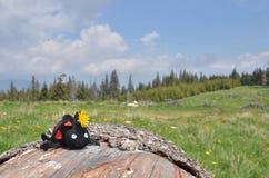 Ladybug игрушки на деревянном журнале, луге стоковое изображение rf