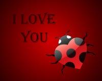 ladybug карточки Стоковые Изображения
