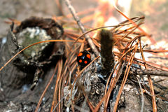 Ladybug на дереве Стоковое Фото