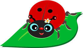 Ladybug на лист Стоковые Изображения