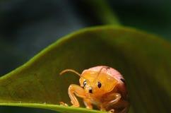 Ladybug на листьях в природе Стоковое Изображение