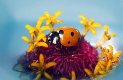 Ladybug на цветках стоковое изображение rf