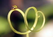 Ladybug на цветках стоковые изображения rf