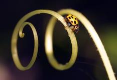 Ladybug на цветках стоковое фото