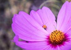 Ladybug на Cosmo Стоковые Изображения RF