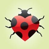ladybug сердца Стоковые Изображения