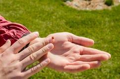 Ladybug на руке стоковые изображения rf