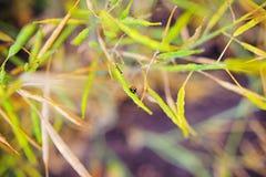 Ladybug сидя на зеленых лист, предпосылка, схематически Стоковые Фото