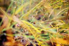 Ladybug сидя на зеленых лист, предпосылка, схематически Стоковое Изображение RF
