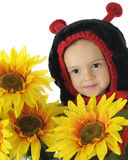 Ladybug солнцецвета Стоковая Фотография