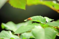 ladybug цветка Стоковые Фотографии RF