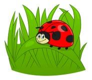 Ladybug шаржа Стоковые Изображения RF