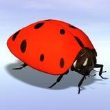 Ladybug #06 Stock Image