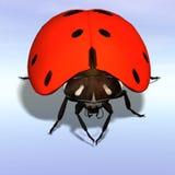 Ladybug #07 Royalty Free Stock Image
