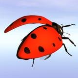 Ladybug #08 Royalty Free Stock Photo
