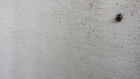 LadyBug [02] Fotografia de Stock