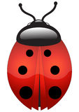 Ladybug. Vector illustration of a ladybug royalty free illustration