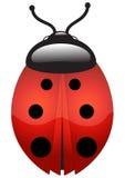 Ladybug Stock Images