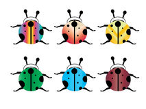 Ladybug. Picture of  Lady beetles on white background Royalty Free Stock Photography