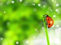 Ladybug Stock Photos