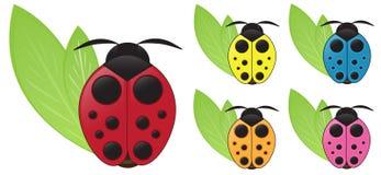 ladybug Стоковые Фото