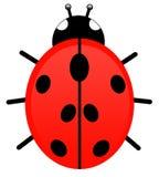ladybug διανυσματική απεικόνιση