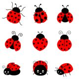 Ladybug. Cute colorful ladybugs illustration isolated on white background