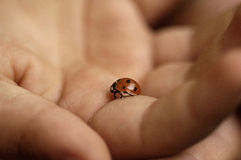 Ladybug. A children hand with small ladybug inside Royalty Free Stock Photography