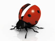 The ladybug. The  ladybug on white background Stock Photography
