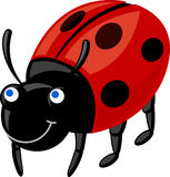Ladybug. Vector illustration of red ladybug Stock Photos