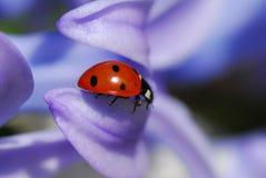 Ladybug foto de stock