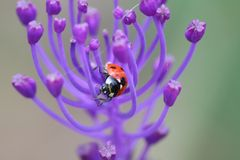 Ladybug. Stock Photo