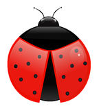 Ladybug. Illustration isolated on white Stock Photo