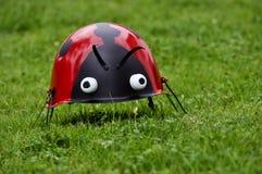 Ladybug Στοκ Φωτογραφία