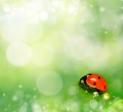 Υπόβαθρο με τις πτώσεις ladybug και δροσιάς Στοκ Φωτογραφία