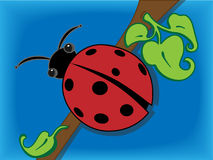 Ladybug. Sitting on a branch near leafs above water Stock Images
