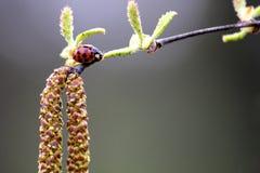 LadyBug [02] Fotografia Stock Libera da Diritti