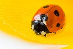 02 ladybug Στοκ φωτογραφίες με δικαίωμα ελεύθερης χρήσης