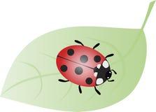 Ladybug Imagens de Stock Royalty Free