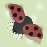 Ladybug Стоковое Фото