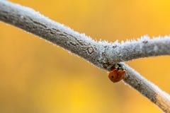 LadyBug [02] Imagens de Stock
