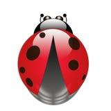 Ladybug Fotos de archivo